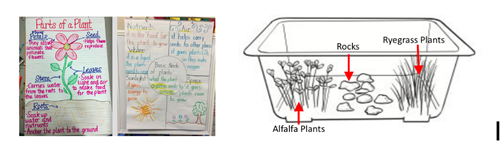 Plant Anchor Charts